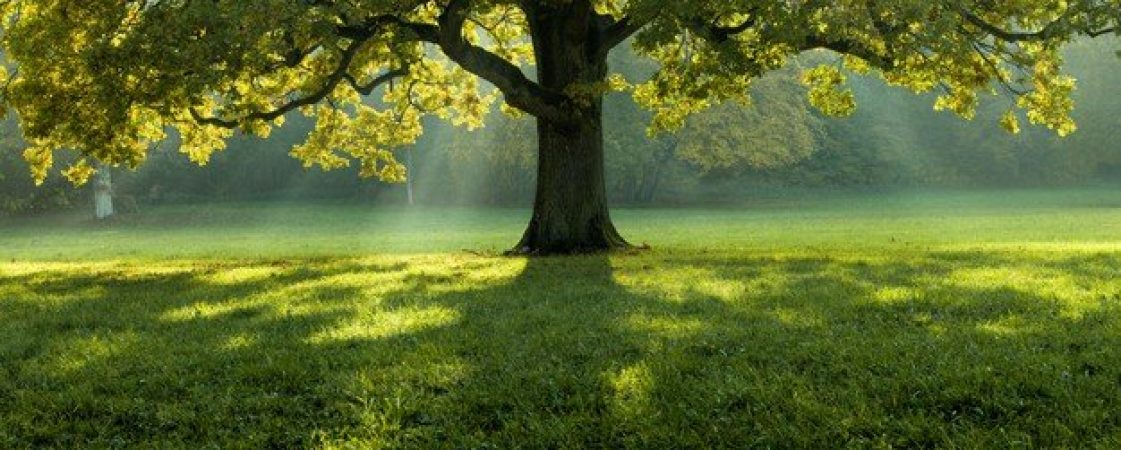 beautiful-tree-middle-field-covered-with-grass-with-tree-line-background_181624-29267